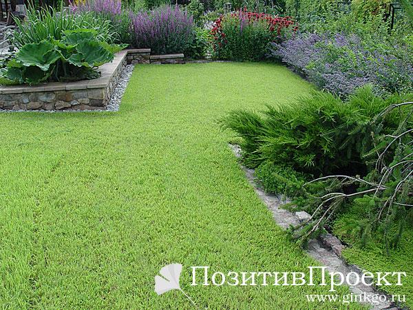 Дизайн газонов фото
