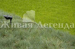 Создание рулонных газонов