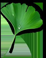 Ландшафтное озеленение и благоустройство территорий